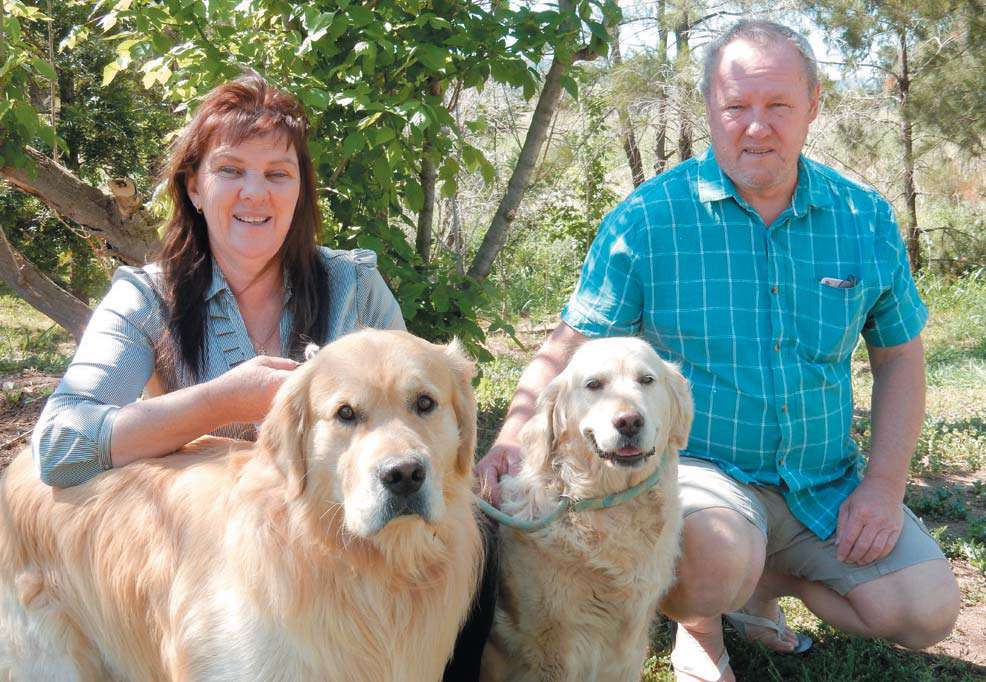 Vickie and Darren Harris with their Golden Retrievers