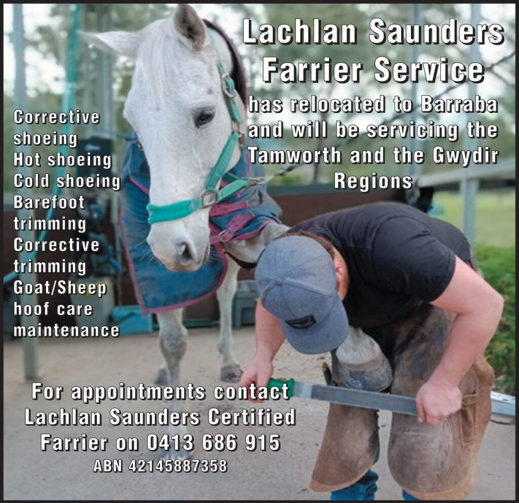 Quality Lachlan Saunders Farrier Services